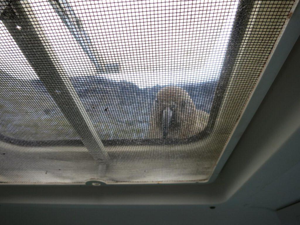 Der freche Kea auf unserem Wohnmobil