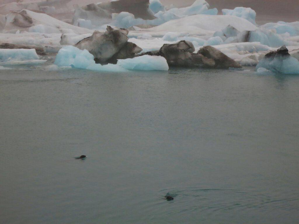 DIE Gletscherlagune: Jökulsarlon