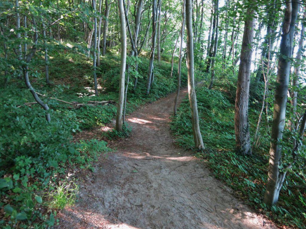 Der Hochuferweg zwischen Baabe und Sellin