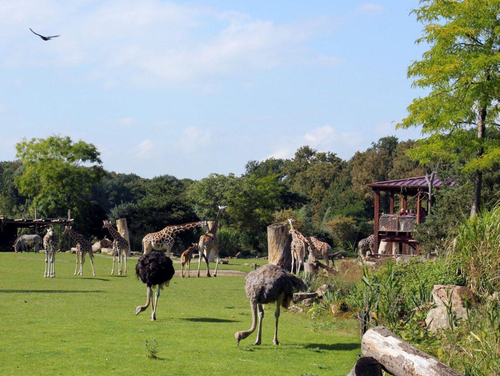 Kiwara-Savanne (© Zoo Leipzig)