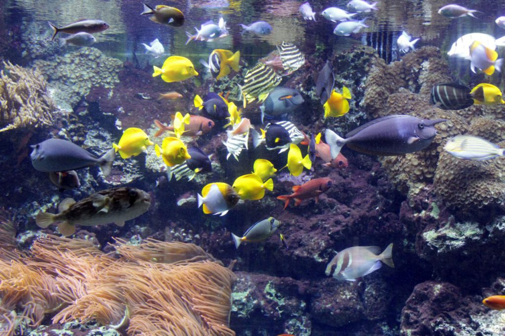 Aquarium (