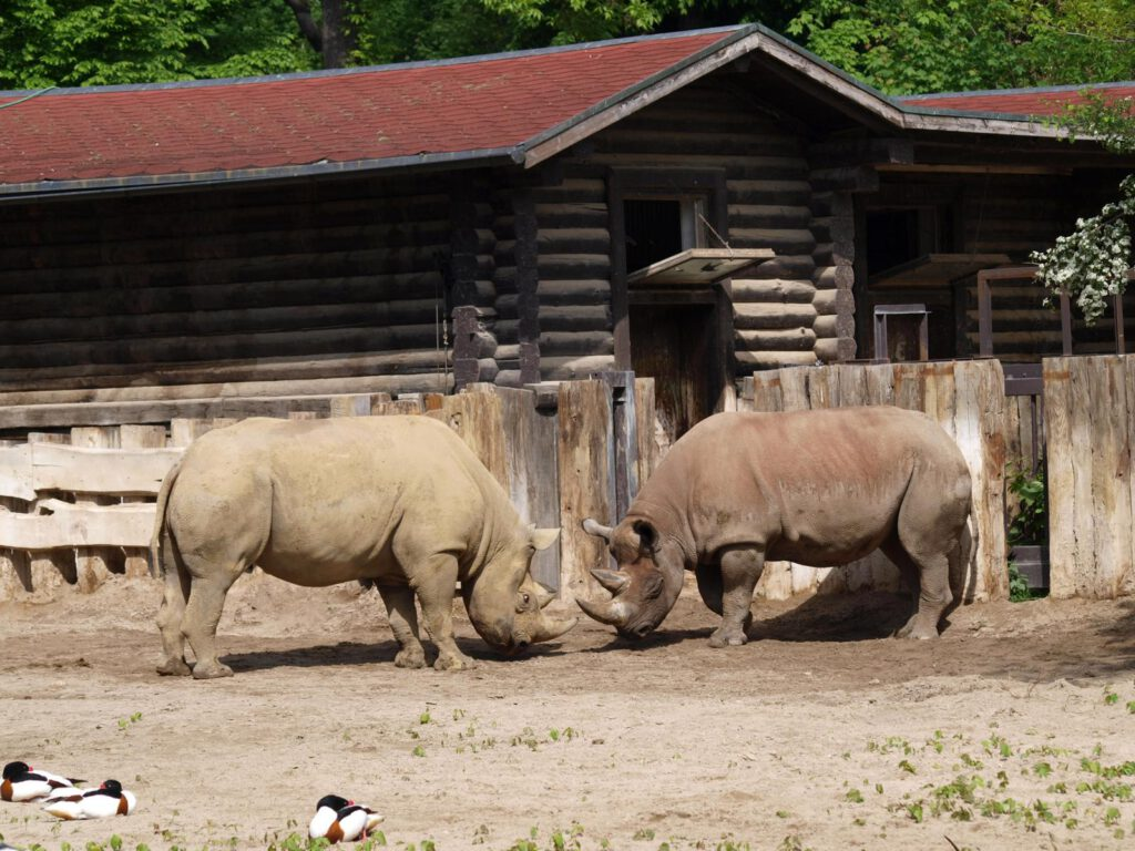 Nashörner (© Zoo Leipzig)