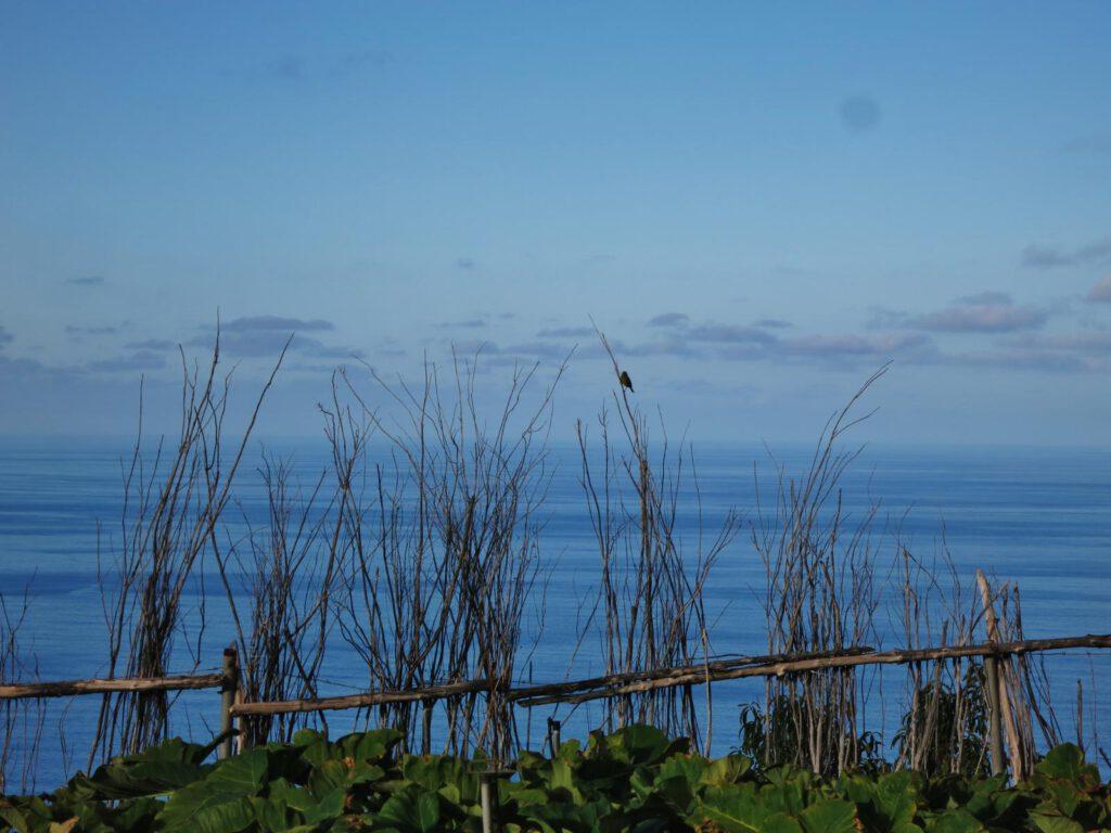 abendlicher Blick zum Meer - Gallegos